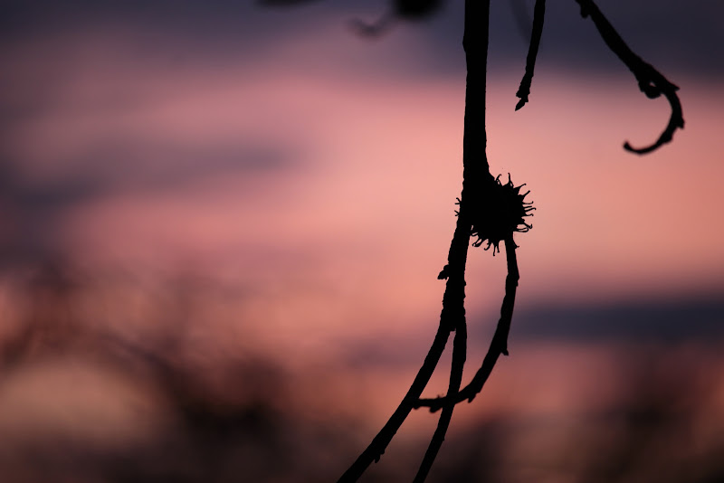tramonto in rosa di Lorenza Bellini