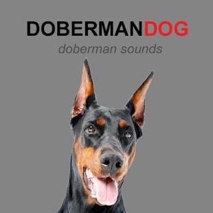 Doberman Dog Sounds and Barks - náhled