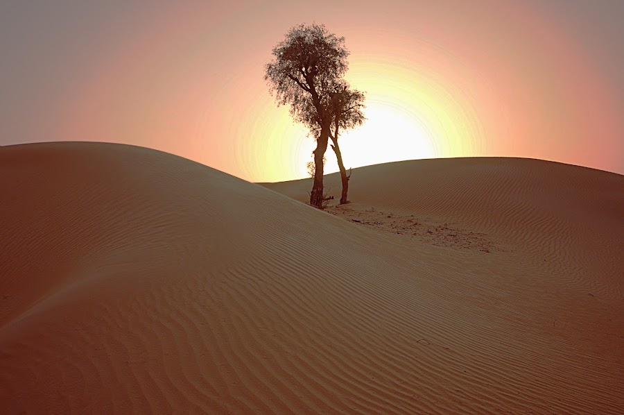 brother by Jerry Fer Damian - Landscapes Deserts ( desert )