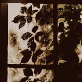 by Anna Williams Hopper - Uncategorized All Uncategorized