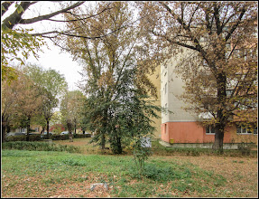 Photo: Tei din Turda, Calea Victoriei, B16 - 2018.10.22