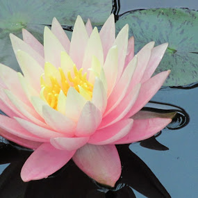 by Dawn Price - Flowers Single Flower (  )