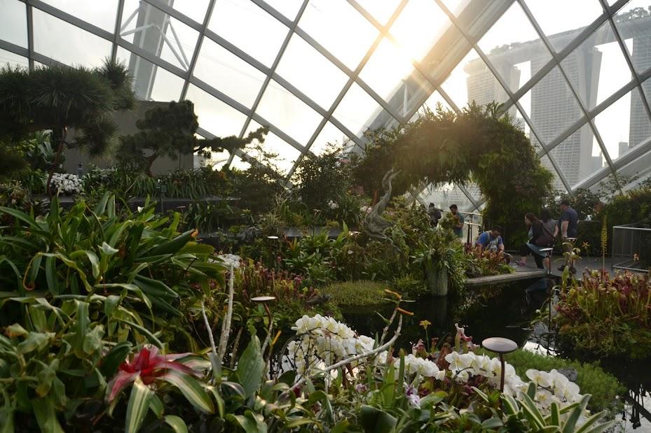 Отчет о поездке в январе 2017 г. на Филиппины Боракай + Сингапур