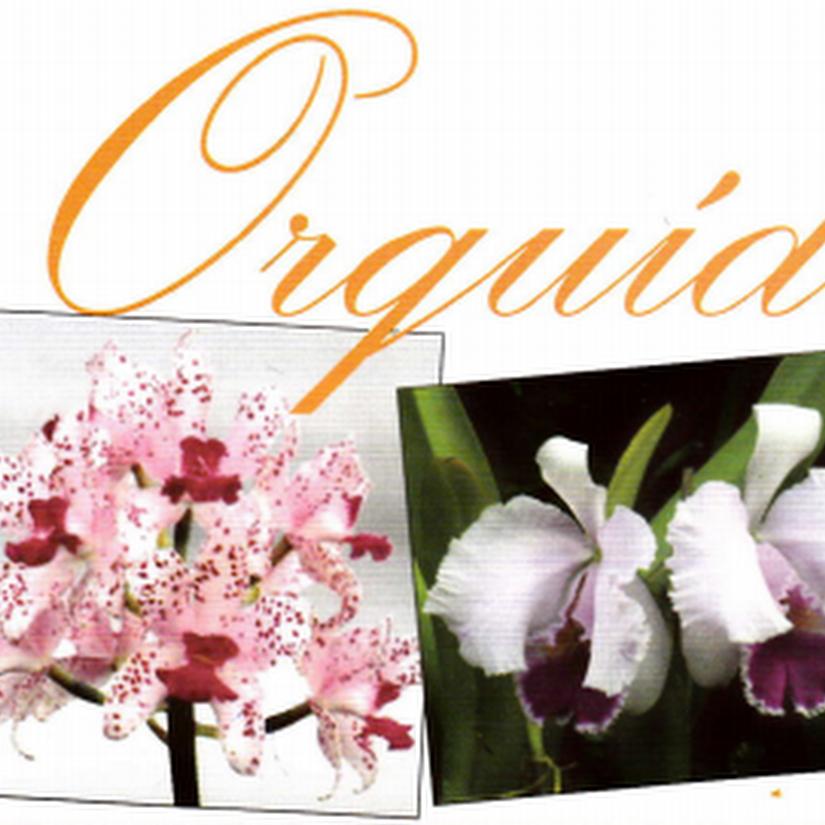 Todo sobre las Orquídeas. El regalo perfecto para Pilar