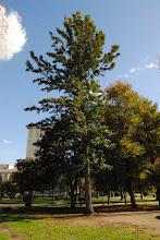 Photo: Carballo Australiano