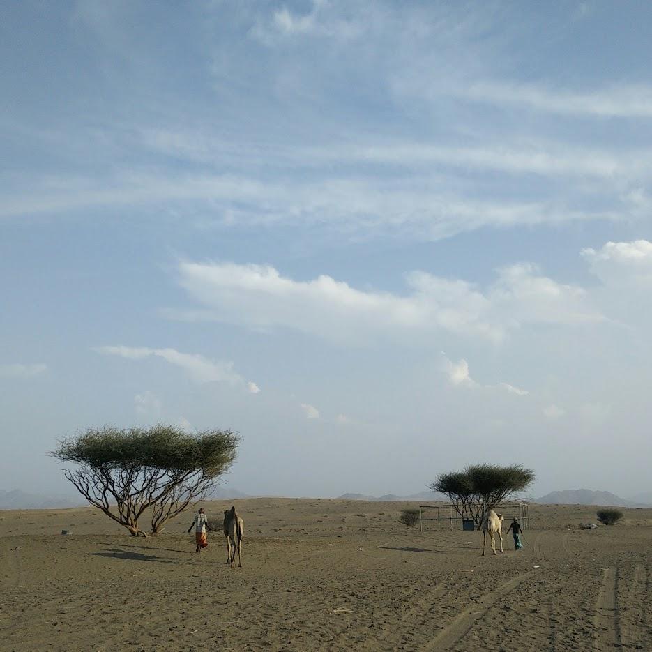 camel herders in oman
