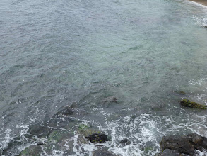 Photo: Sea turtle
