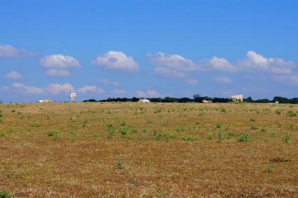 Mucche e nuvole di teppistocle
