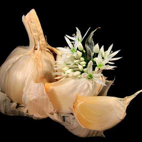GARLIC by Karen Tucker - Food & Drink Fruits & Vegetables ( clove, stilllife, garlic, garlic flower, onion family, garlic bulb, still life, garlic clove, cooking ingredient, vegetable, flower,  )