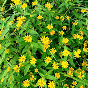 Green greets Yellow... by Gautam Tarafder - Flowers Flowers in the Wild (  )