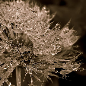 by Ivanka Ruter - Nature Up Close Other plants