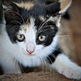 Medley by Pieter J de Villiers - Animals - Cats Kittens