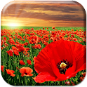 Red Poppy Live Wallpaper icon