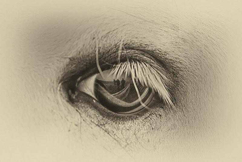 riflessi in un occhio...di cavallo di Fotodiale