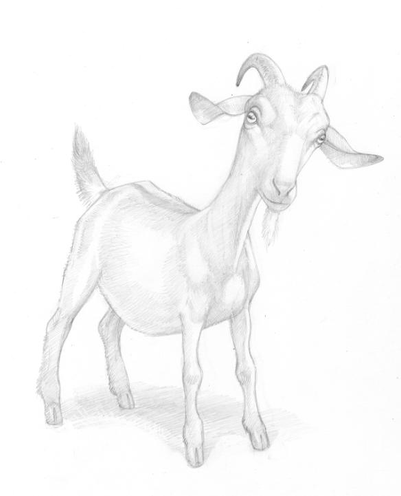 The Shepherd's Crown - goat