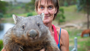 A House Full of Wombats thumbnail