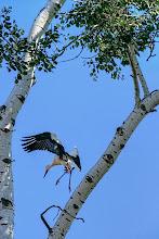 Photo: Stork Landing - by Matt Shalvatis