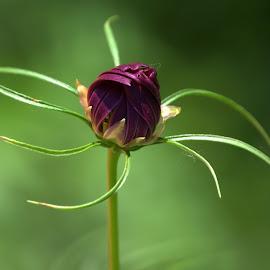 Single Star by Larry Bidwell - Flowers Single Flower