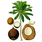 coconut android apps on google play product from the coconut tree