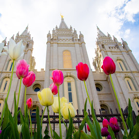 Tulips at the Temple by Richard States - Buildings & Architecture Places of Worship ( utah, gardens, tulips, flowers, salt lake city,  )