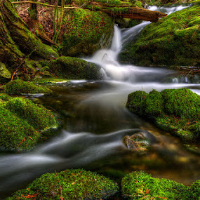 Nature's Natural Path by Don Guindon - Landscapes Forests ( stream, nature, creek, moss, pwcpaths-dq, rain forest )