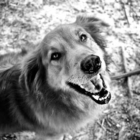 by Amber Thomas - Animals - Dogs Portraits