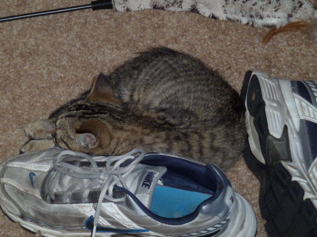 Photo: Tybalt snuggles up to Josh's shoe.