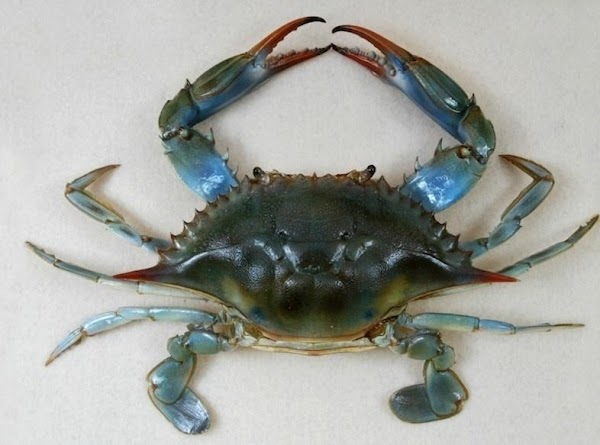 The fist two steps are for fresh caught crabs ONLY! If blue crabs are...