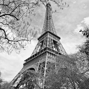 Eiffel Tower Panorama by Ewan Arnolda - Buildings & Architecture Statues & Monuments ( iconi, paris, famous, structure, france, architecture, steel )