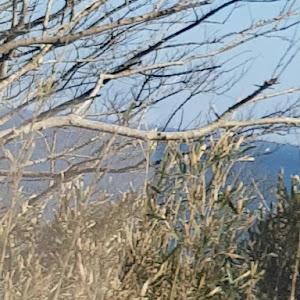 クラウンロイヤル GS131のカスタム事例画像 海クラ131さんの2020年03月10日19:47の投稿