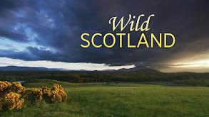 Wild Scotland thumbnail