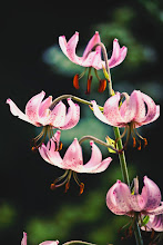 Photo: http://www.redbubble.com/people/inspiraimage/works/12492887-pink-martagon-lilies