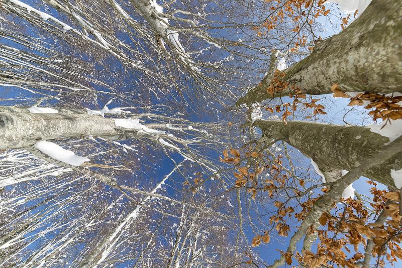 Inverno al Cerreto di mirella_cozzani