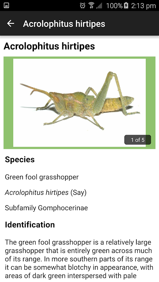 Grasshoppers of the Western US- screenshot