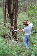 Photo: Wood-cutting crew