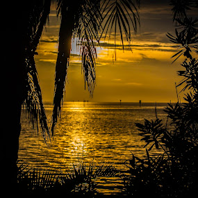 Through The Window by Don Kuhnle - Landscapes Sunsets & Sunrises ( waves, orange, sand, ripples, ocean, florida, gulf of mexico, sunset, beach, water, palm trees,  )