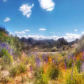 My Painted Desert by Morris Fremar - Instagram & Mobile iPhone