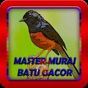 Master Murai Batu Gacor