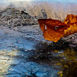 Autumn on Ice by Jonathan Wheeler - Nature Up Close Water ( blue ridge mountains, frozen streams, ice crystals, frozen waterfalls, western nc )