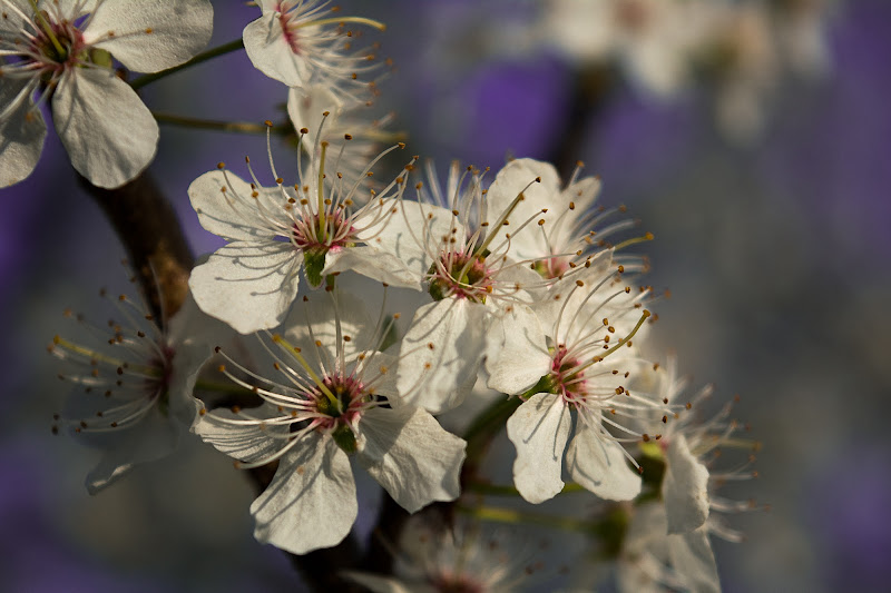 """""""Leggeri come fiori di melo"""" di Barbara Surimi"""