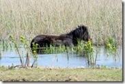 horse river