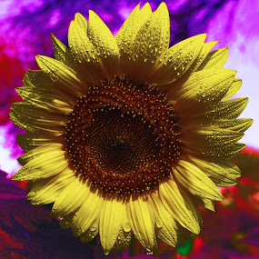 Contrast by Sanjeev Leihao - Nature Up Close Flowers - 2011-2013