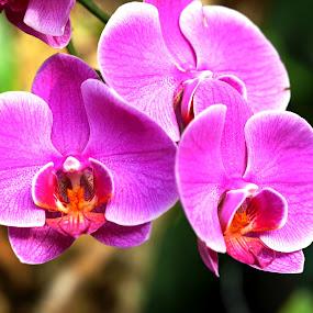 by Alnia Furwani Maulina - Flowers Flower Gardens (  )