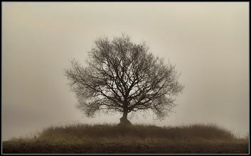 Photo: 20. november 2011 - Træet
