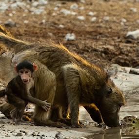 by Fanie Weldhagen - Animals Other Mammals