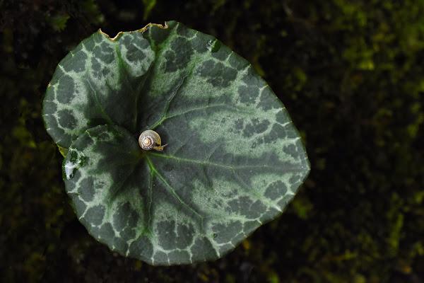 Un solo pianeta, tanti piccoli mondi - One planet, many small worlds di -Os-