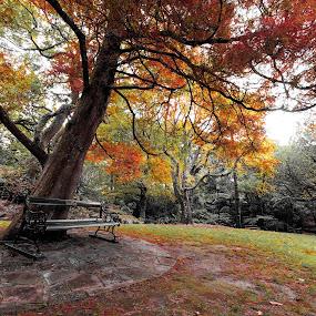 by Alister Munro - City,  Street & Park  City Parks (  )