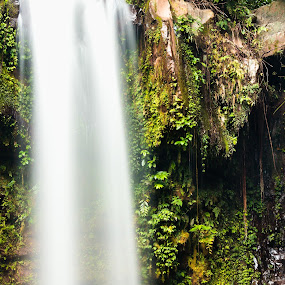 waterfall in the wild by Lubelter Voy - Landscapes Forests ( plant, water, wild, park, green, waterfall, forest, travel, nature, fresh, outdoor, reserve, wet, natural )