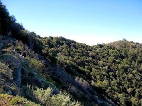 Photo: View south toward the ridge