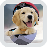 Game Pocket Puppy Dogs GO APK for Windows Phone